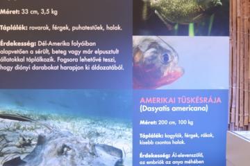 A tenger világa - Interaktív kiállítás 20