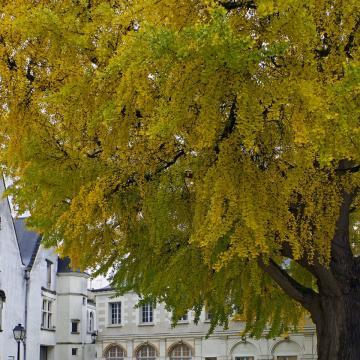 Loire-menti kastélyparkaban