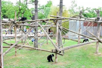 Megújult a csimpánzok otthona! 46