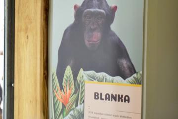 Megújult a csimpánzok otthona! 38