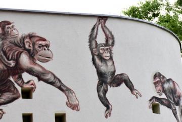 Megújult a csimpánzok otthona! 24