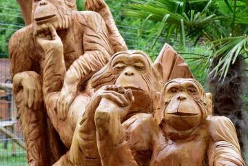 Megújult a csimpánzok otthona! 48