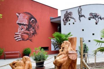 Megújult a csimpánzok otthona! 47