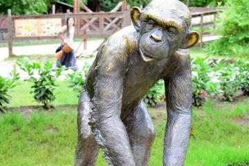 Megújult a csimpánzok otthona! 53